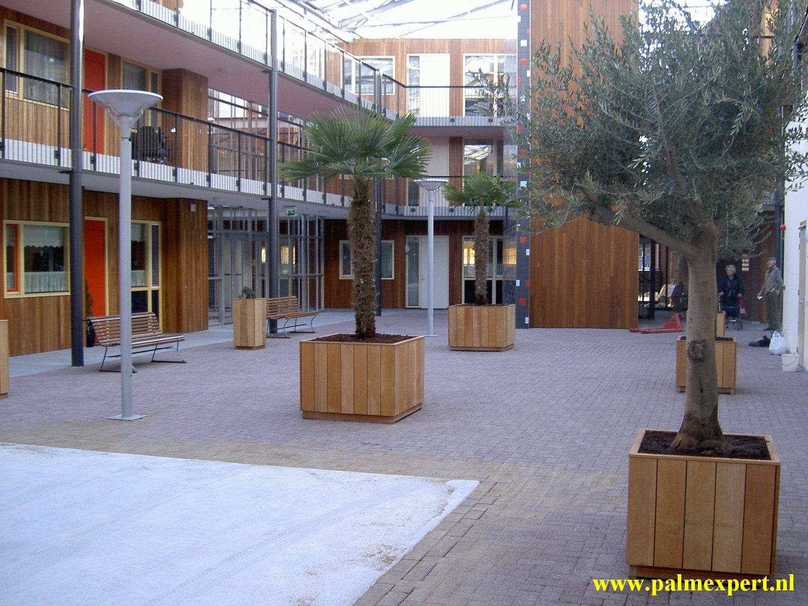 Verwonderlijk Onderhoud olijfbomen | Beste verzorgingstips | Palmexpert.nl UC-57