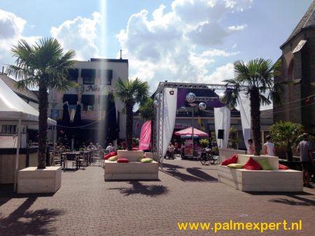 Verhuur Palmbomen / Palmen