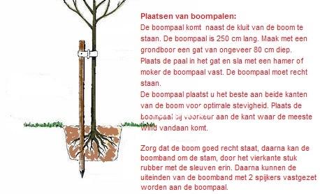 Set van 2 boompalen + boomband
