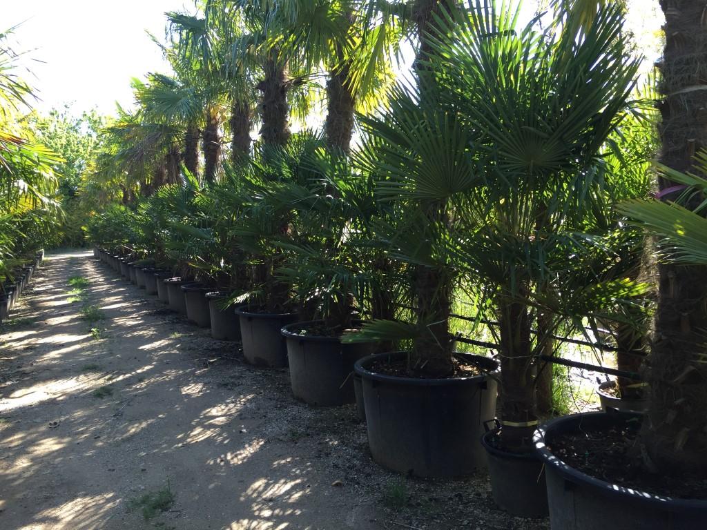 eigen import van palmbomen