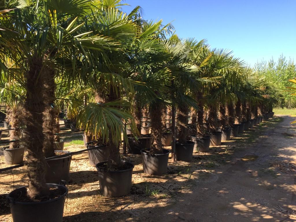 palmbomen importeren
