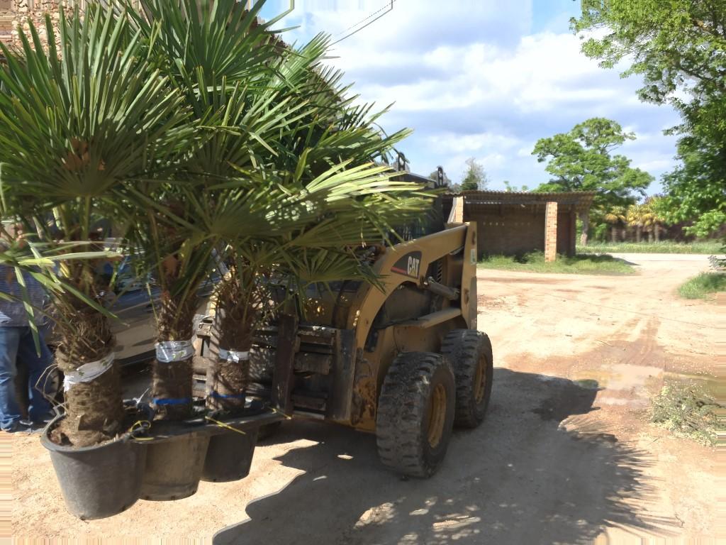 palmbomen selecteren voor import