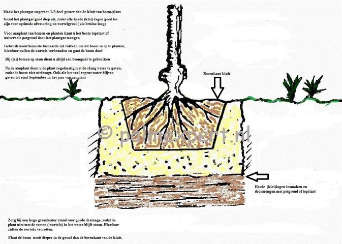 Het planten van bomen en leibomen