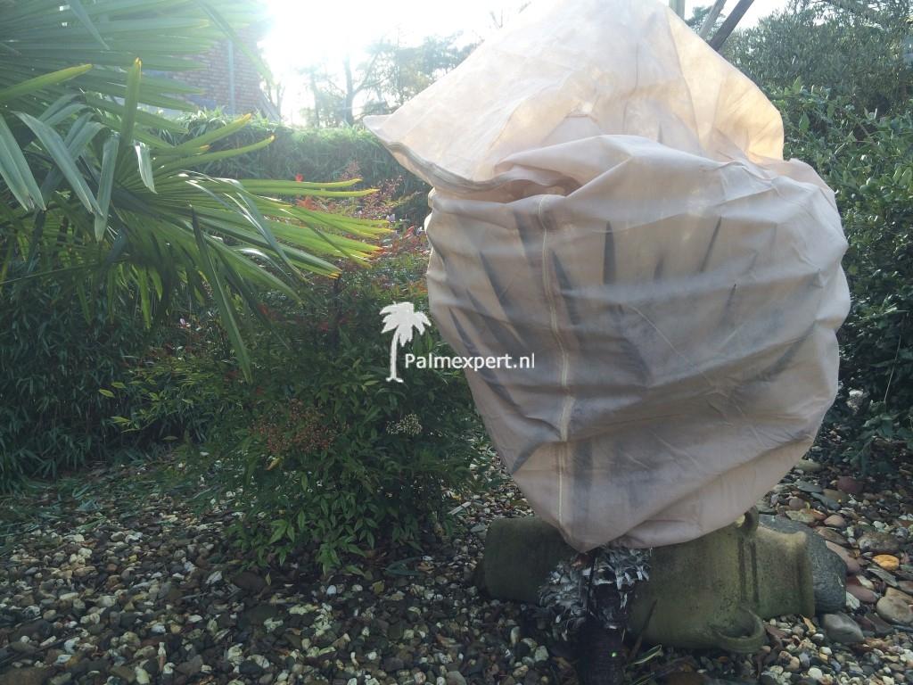 vliesdoekhoes voor palmbomen